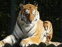 Visión general: Tier- und Freizeitpark Thüle